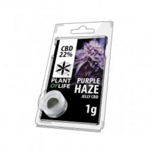 Purple Haze   Plant of Life